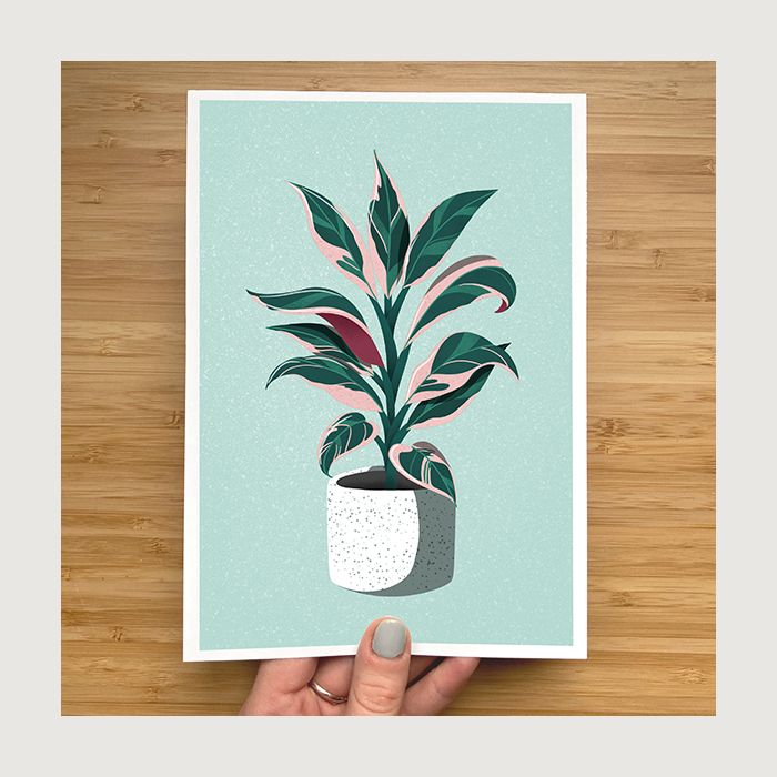 Pink and Green House Plant Print
